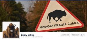 zubry online